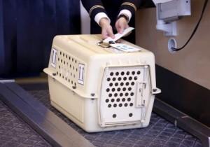 Как перевозить домашних животных: правила, законы, советы